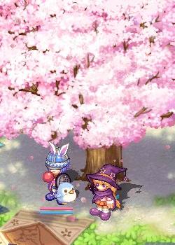伝説の樹でも枯れない桜でもない